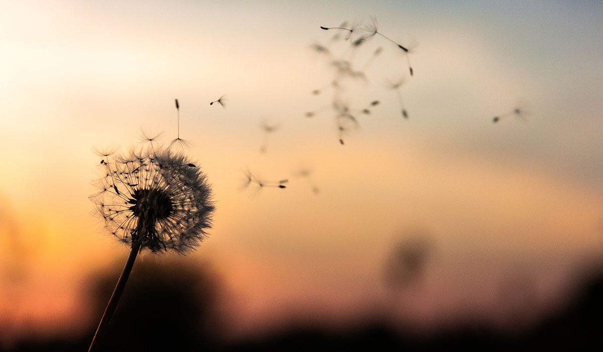 Allergien (unsplash/dawid-zawila-279998)